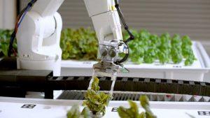 robot granja